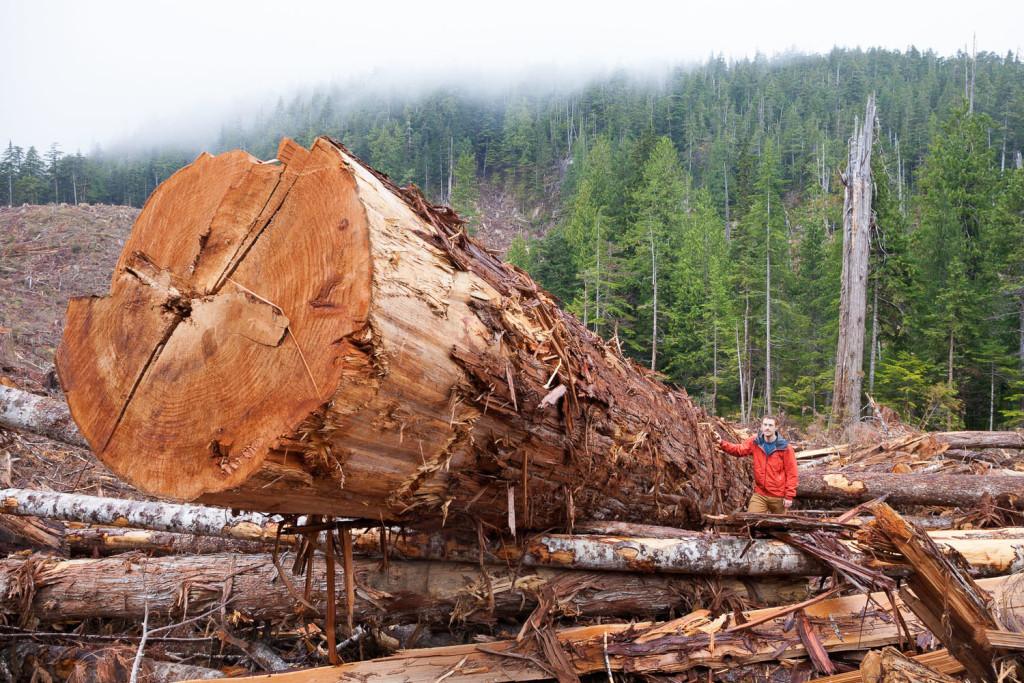 Old-growth logging on Edinburgh Mt. near Port Renfrew in 2016