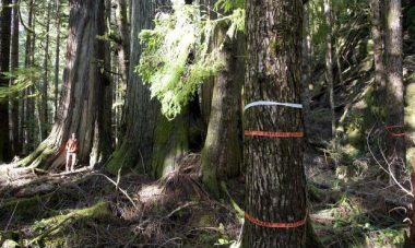 T.J. Watt of the Ancient Forest Alliance stands by a stand of old growth forest just outside of Port Renfrew that is designated for logging