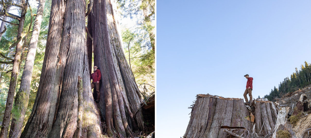 NEW Photo Gallery: Before & After Logging – Caycuse Watershed